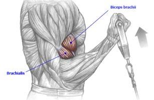 Bíceps polia baixa - Rosca polia